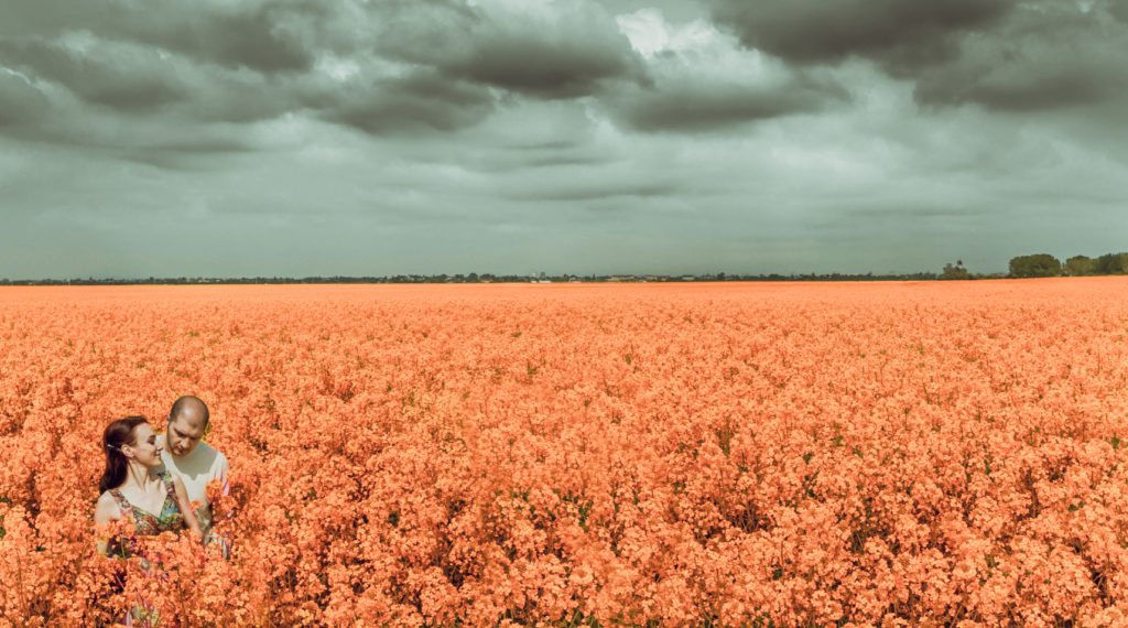фотосессия в цветочном поле
